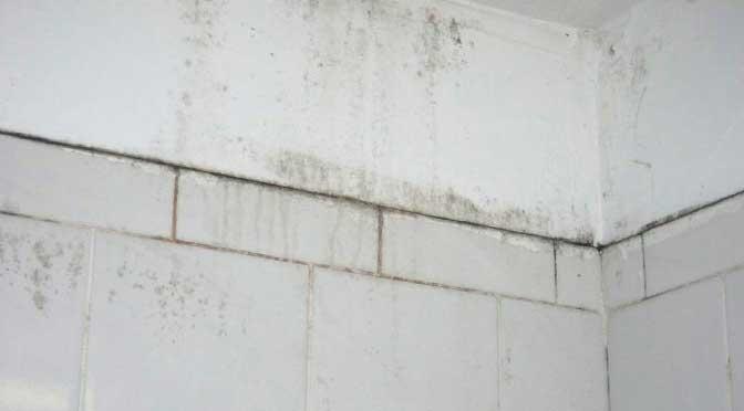 Schimmel In Huis : Schimmel in huis steen impregneren
